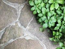 tuinen en vegetatie Stock Fotografie