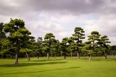 Tuinen van het Emperial-Paleis in Tokyo, Japan Royalty-vrije Stock Foto