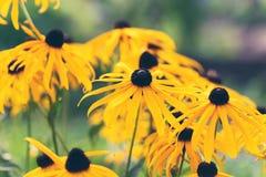 Tuinenbloesem in volledige bloei Bloemen in kleine clusters op een struik abstracte achtergrond Stock Foto's
