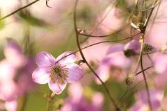 Tuinenbloesem in volledige bloei Bloemen in kleine clusters op een struik abstracte achtergrond Royalty-vrije Stock Afbeeldingen