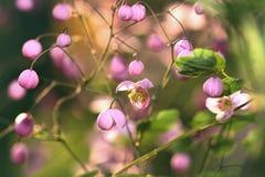 Tuinenbloesem in volledige bloei Bloemen in kleine clusters op een struik abstracte achtergrond Stock Afbeeldingen