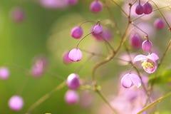 Tuinenbloesem in volledige bloei Bloemen in kleine clusters op een struik abstracte achtergrond Royalty-vrije Stock Foto's
