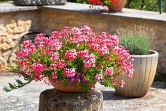 Mooie hoek van een de zomertuin royalty vrije stock afbeeldingen afbeelding 20115859 - Buiten muur kraan decoratieve ...