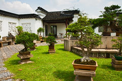 Tuinier een bonsai, Singapore Royalty-vrije Stock Foto