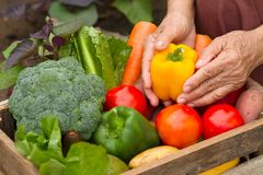 Tuiniert de oogst organische groente thuis, eigengemaakt product klaar aan verkoop royalty-vrije stock foto