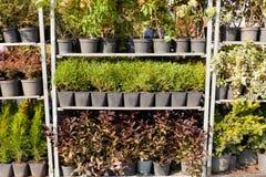Tuininstallatie kleinhandels, landbouwersmarkt stock foto