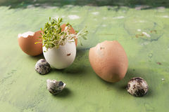 Tuinkerssalade met shell eieren op de groene achtergrond Concept het gezonde eten Stock Foto