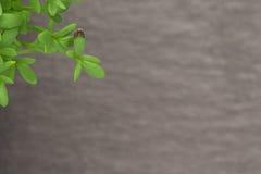 Tuinkersspruit over lei Royalty-vrije Stock Foto