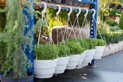 Tuinkinderdagverblijf kleinhandels, landbouwinstallaties in potten stock foto's