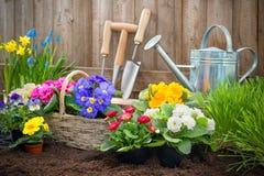 Tuinman die bloemen planten Stock Foto's