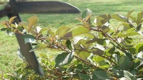 Tuinman die een struik snijden stock videobeelden