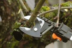 Tuinman die oude boom met het snoeien van scharen snoeien Royalty-vrije Stock Foto's