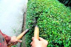 Tuinman die zij de theeomheining van omheiningsHokkien met Grasscharen snijden stock afbeeldingen