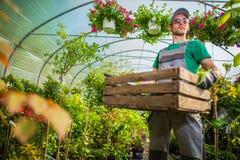 Tuinman Greenhouse Work Stock Afbeelding
