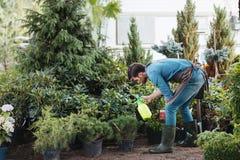 Tuinman het bespuiten plant terwijl het werken in tuin Stock Foto