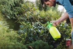 Tuinman het bespuiten plant terwijl het werken in tuin Stock Afbeeldingen