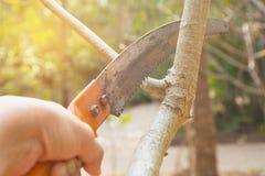 Tuinman het snoeien bomen met het snoeien van scharen op aardachtergrond Royalty-vrije Stock Afbeeldingen
