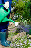 Tuinman het water geven bloemen Stock Afbeeldingen