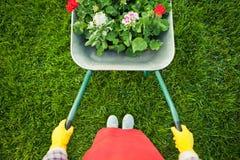 Tuinman met bloemen in kruiwagen Stock Afbeeldingen