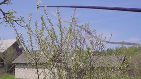 Tuinman met het bespuiten van een bloeiende fruitboom tegen plantenziekten en ongedierte De spuitbus van de gebruikshand met pest stock footage