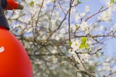 Tuinman met het bespuiten van een bloeiende fruitboom tegen plantenziekten en ongedierte De spuitbus van de gebruikshand met pest royalty-vrije stock foto