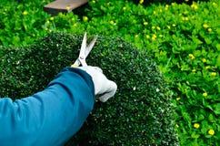 Tuinman in orde makende haag in de boom stock afbeelding