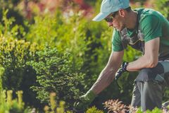 Tuinman Planting New Trees Royalty-vrije Stock Foto's