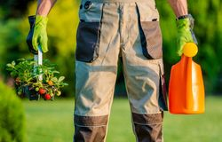 Tuinman Planting Strawberries stock afbeelding