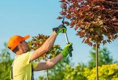 Tuinman Shaping Trees Royalty-vrije Stock Afbeeldingen
