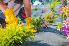 Tuinman Spring Planting royalty-vrije stock foto's