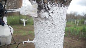 Tuinman Whitewash Tree Trunk met Krijt in Tuin, Boomzorg in de Lente Langzame Motie stock video