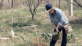Tuinmanvrouw die gieter voor het water geven van decoratieve struik in tuinbinnenplaats met behulp van stock footage