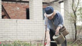 Tuinmanvrouw het water geven bloeit bed van het water geven van pot terwijl het tuinieren het werk stock video