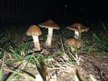 Tuinpaddestoelen bij nacht met flits worden gefotografeerd die Royalty-vrije Stock Foto's