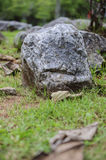 Tuinpatronen Stock Foto's