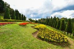 Tuinpijnboom en bloemen royalty-vrije stock fotografie