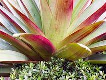 Tuinstruik met de Brede Bladeren van Pointy stock fotografie