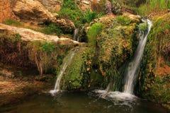 Tuinwaterval Stock Afbeeldingen