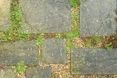 Tuinweg Stock Foto's