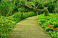 Tuinweg, de Botanische Tuinen van Singapore Stock Foto