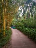 Tuk Tuk in het bamboe en de palmengroef royalty-vrije stock foto's