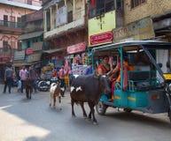 Tuk-tuk och för indier sakrala kor arkivbilder
