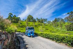 Rikshaw in Tea field plantations, Sri Lanka. Tuk Tuk Rikshaw going through Tea field plantations in the mountain area in Haputale Sri Lanka royalty free stock photography