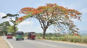 Tuk-tuk на открытой дороге, Шри-Ланка Стоковая Фотография