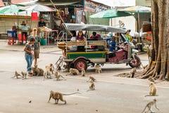 Tuk-tuk tradizionale del taxi di trasporto nell'ambiente delle scimmie selvagge Immagine Stock Libera da Diritti