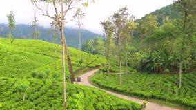 Tuk Tuks en la bobina del camino a través del estado del té, montañas