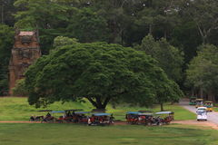Tuk tuks under a tree Stock Images