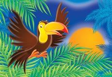 tukan ilustracji