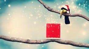 Tukan med jultomten hatt och julklapp Royaltyfri Bild