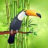 Tukan- och bambubakgrunder vektor illustrationer